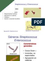 Streptococcus y Enterococcus