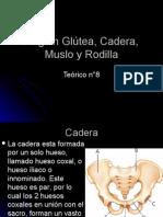 Región Glútea, Cadera, Muslo y Rodilla (Teorico N° 8)