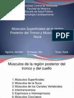 Diapos Musculos