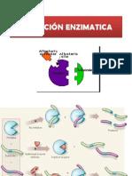 06-enzima..