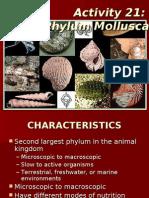 Activity 21_ppt Phylum Mollusca