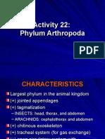 Activity 22_ppt Phylum Arthropod A