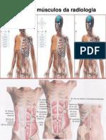 Músculos_principais-radiologia_e_enf