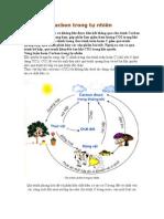 Chu trình Cacbon trong tự nhiên
