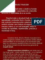 Curs v - Fibra Musculara