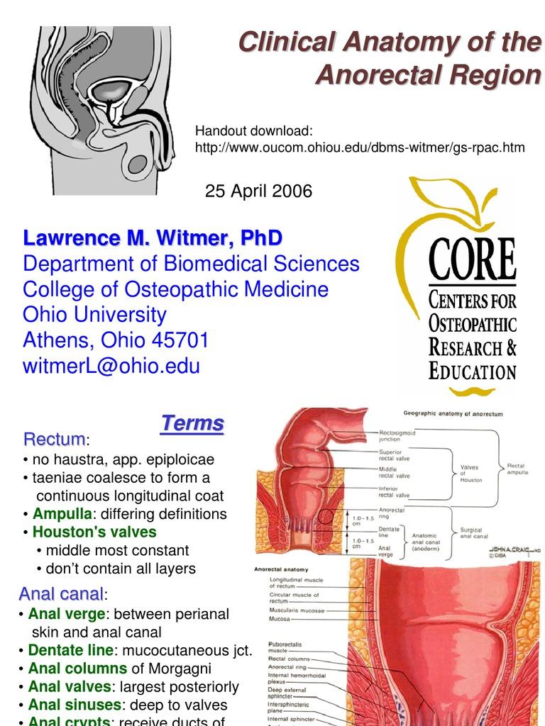 Anatomy of anorectal region