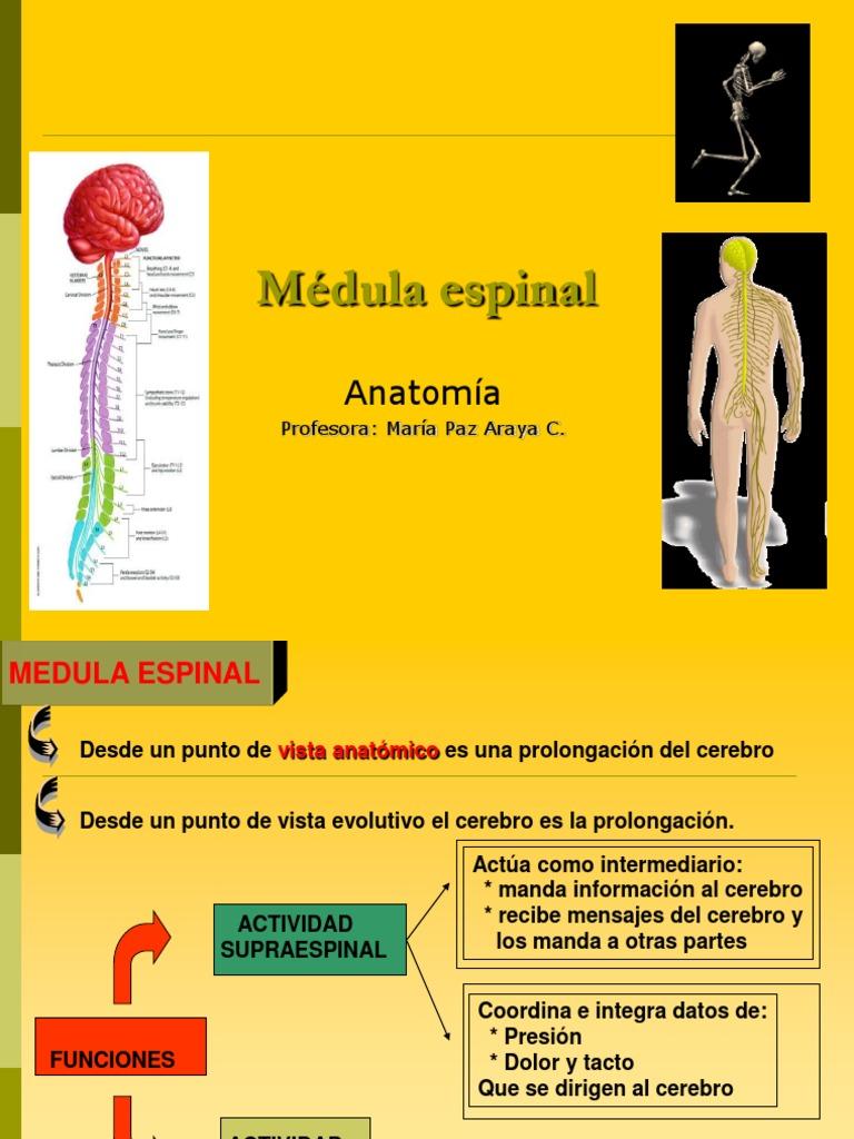 MÉDULA ESPINAL Y S.N. PERIFÉRICO