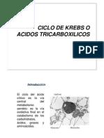 3. Ciclo de Krebs