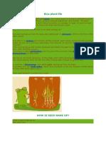 Rice Plant Life