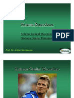 Sistema Genital MeF