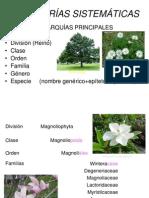 Plantas Vasculares Sin Semilla I