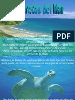 Ecología Marina