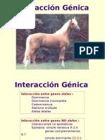 Interacción Génica 2005