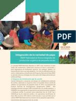 Integración de la variedad de papa INIAP-Natividad en fincas integrales de producción orgánica de pequeña escala