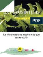clases_fotosintesis