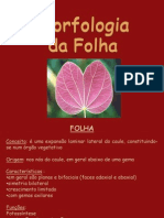 Aula 04 - Organografia Folha