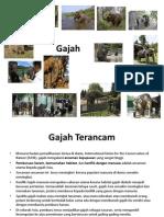 Bio Gajah Translate