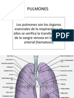 PULMONES anatomia1