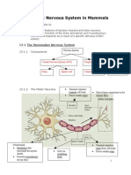 Chapter 13 Nervous System in Mammals - Lecture Notes