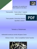 6taclase-Tenias 1