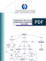 Diagrama de Conceitos_Estrutura e Duplicação Do DNA