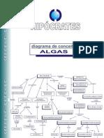 Diagrama de Conceitos_Algas Protista