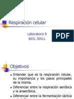 respiracion celular_02