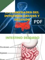 Enfermedades Del Intestino Grueso y Delgado