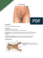 Obstetricia - Canal de Parto