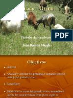 caprinoyovino-100505115535-phpapp01