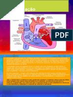 A circulação e sistema respiratório apresenta.slides
