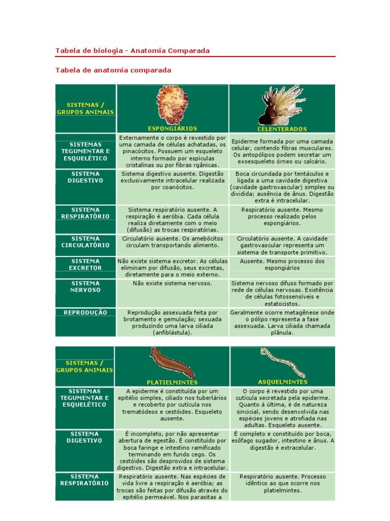 Perfecto Biología Anatomía Comparada Bosquejo - Imágenes de Anatomía ...