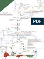 Www2.Iq.usp.Br Docente Miyamoto QBQ0105 Enfermagem Mapa Metabolismo de Carboidratos e Cadeia Respiratoria