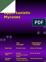 """הפטריות האופורטוניסטיות- המשמעות הקלינית וגורמי המחלה- ד""""ר י"""