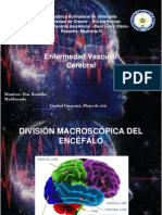 Enfermedad Vascular Cerebral LISTO Este