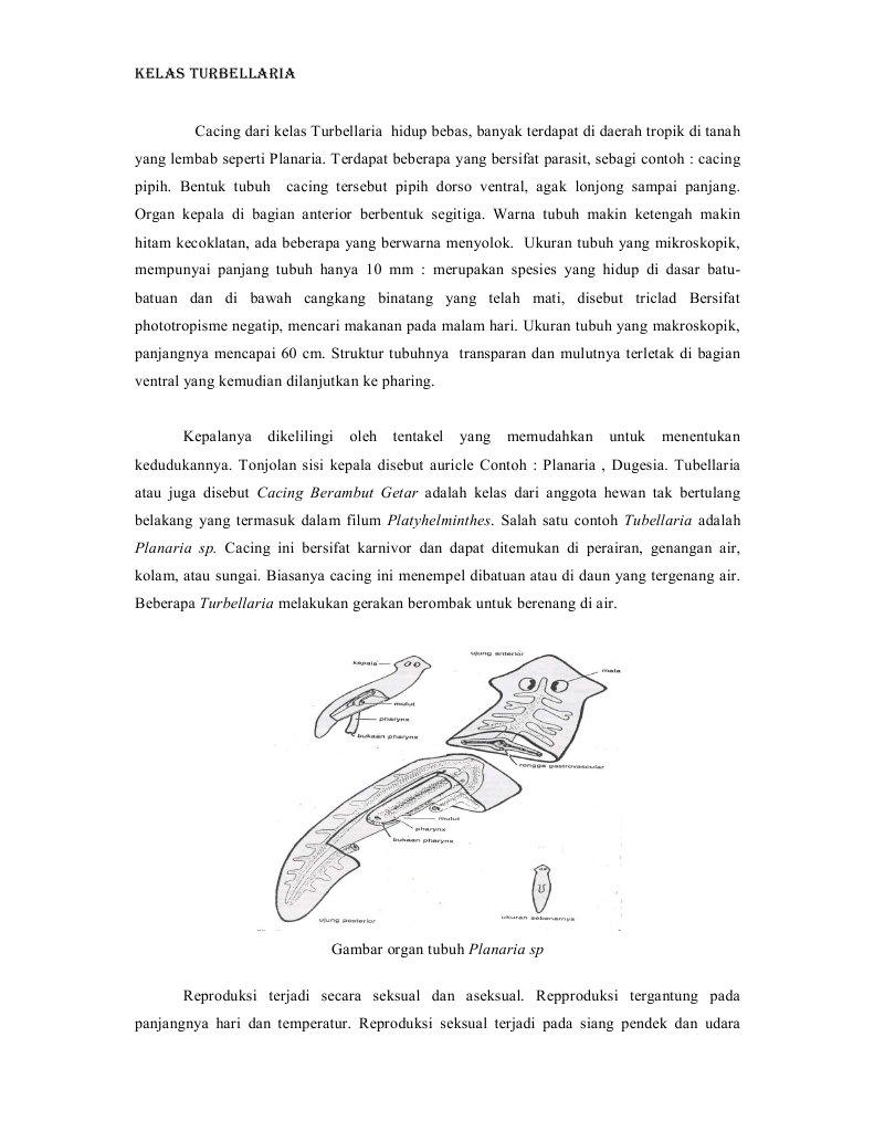 42 Gambar Hewan Planaria Sp Terbaru