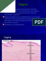 Sistema Re Product Or Femenino Parte IV