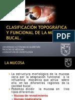 Mucosa_bucal