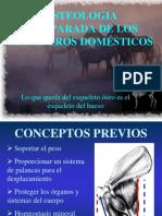 OSTEOLOGIA COMPARADA