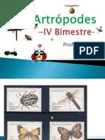 Arthropodes