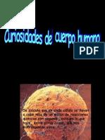 curiosidadesdelcuerpohumano2