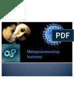 Metapneumovirus