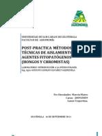 POST-PRACTICA  MÉTODOS Y TÉCNICAS DE AISLAMIENTO DE AGENTES FITOPATÓGENOS (CULTIVO TRAMPA (MANZANA)  PARA   Phytophthora,   siembra de  Phytophthora, )
