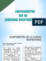 Componentes de La Cadena Respirathoria