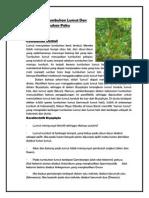 Menganalisis Tumbuhan Paku Dan Tumbuhan Lumut
