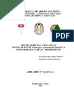 Estudio de propagacion sexual de Pino de monte (Podocarpus glomeratus) en la comunidad de Sailapata (Cochabamba, Bolivia)