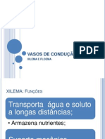 VASOS DE CONDUÇÃO_Xilema