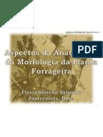 Anatomia e Morfologia Da Planta Forrageira