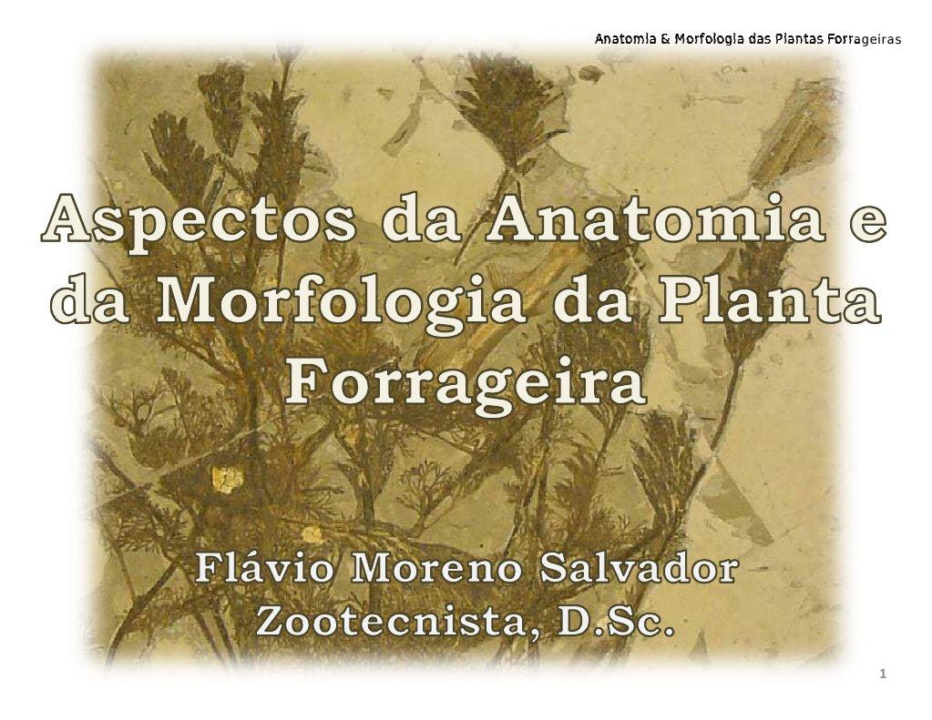 Magnífico Anatomía De La Planta Y La Morfología Viñeta - Anatomía de ...