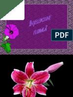 Intelepciune florala